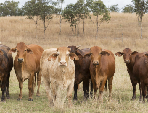 New Pasture Growth Tool on Long Paddock