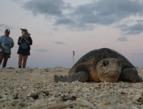 Burnett Mary Regional Group receives boost for turtle population
